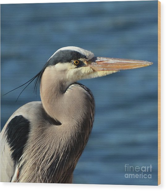 A Great Blue Heron Posing Wood Print