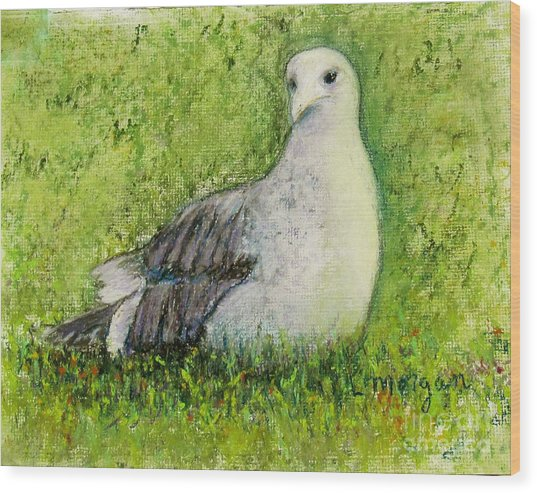 A Gull On The Grass Wood Print