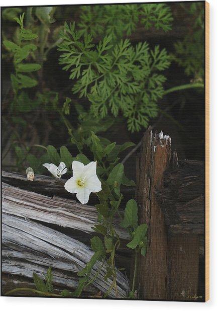A Hobo Wood Print by Daniel G Walczyk