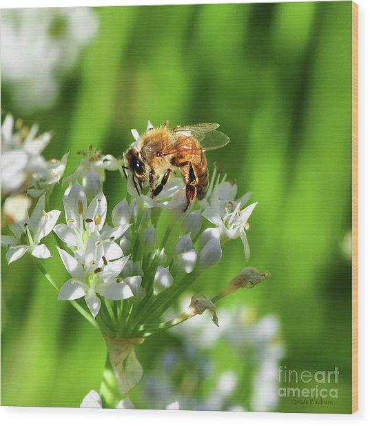 A Honey Bee At Work In An Herb Garden Wood Print