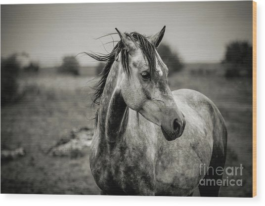 A Horse In Profile In Black And White Wood Print