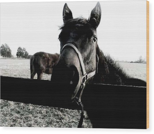 A Horse In The Country Wood Print
