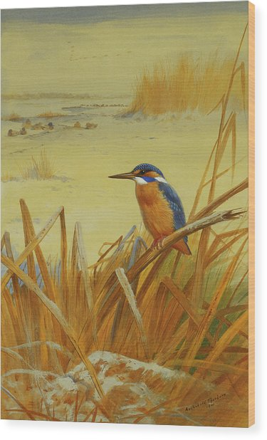 A Kingfisher Amongst Reeds In Winter Wood Print