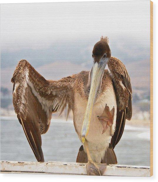 A Leg Up, Brown Pelican Wood Print
