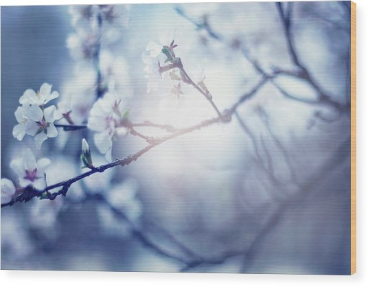 A Light Exists In Spring Wood Print