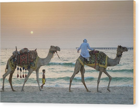 A Little Boy Stares In Amazement At A Camel Riding On Marina Beach In Dubai, United Arab Emirates Wood Print