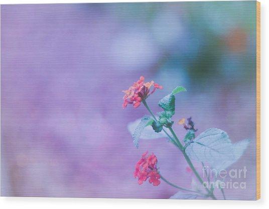 A Little Softness, A Little Color - Macro Flowers Wood Print