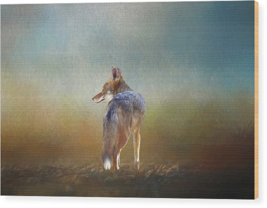 A Lone Coyote Wood Print