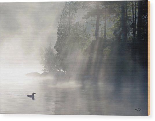 A Loon In The Mist Wood Print