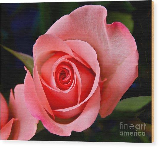 A Loving Rose Wood Print