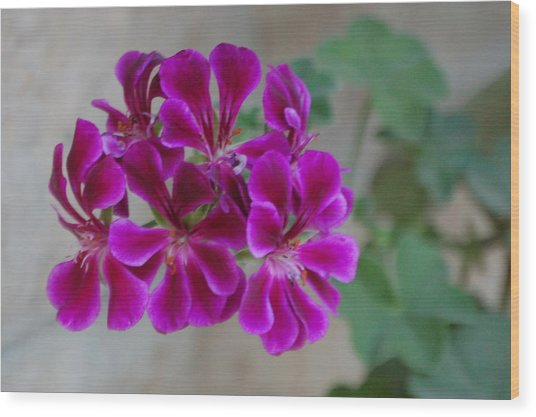 A Magenta Flower Wood Print by Susan Heller
