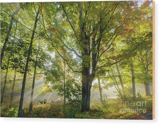 A Misty Fall Morning Wood Print