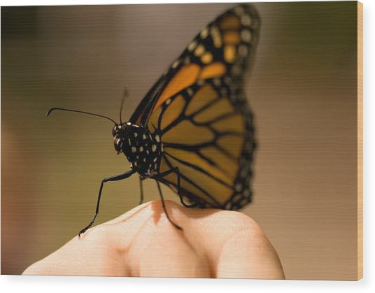 A Monarch Butterfly At The Butterfly Wood Print
