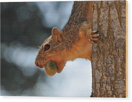 A Mouthful Wood Print by Teresa Blanton