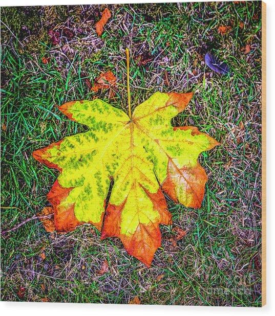 A New Leaf Wood Print
