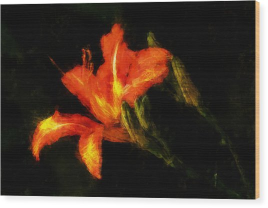 A Painted Lily Wood Print