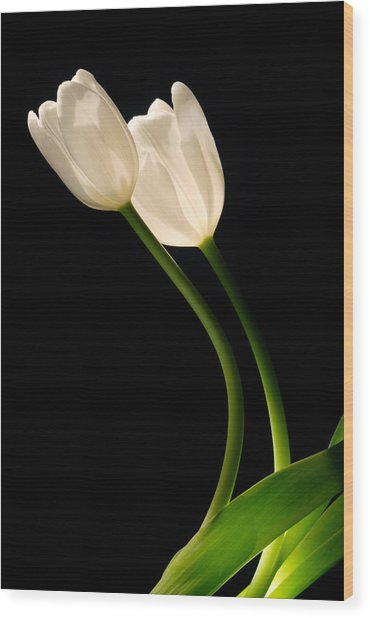 A Pair Of White Tulips Wood Print