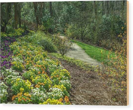 A Path Of Color Wood Print