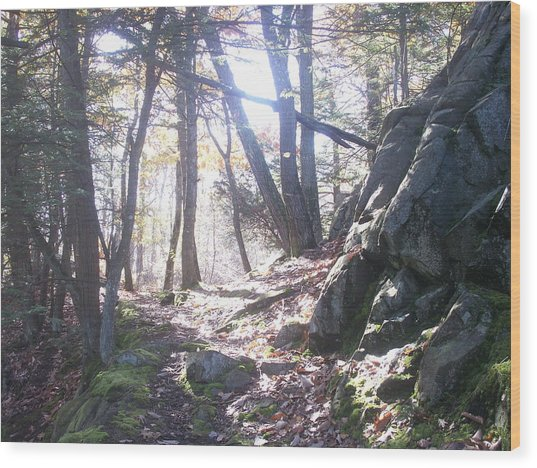 A Path Once Travelled Wood Print
