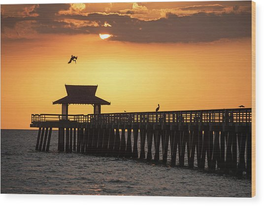 A Pelican Dive-bomb At The Naples Pier Naples Fl Wood Print