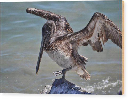 A Pelican Practising A Karate Kick Like Daniel In The Karate Kid Wood Print