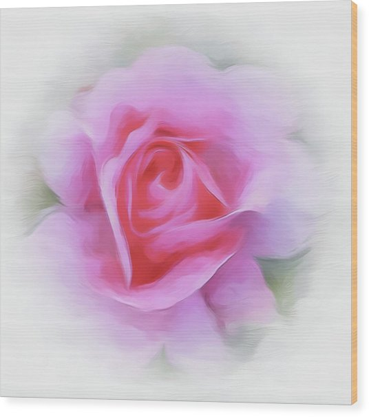 A Perfect Pink Rose Wood Print