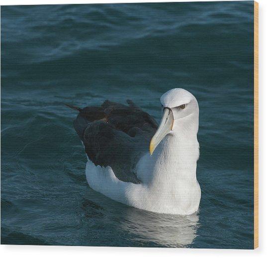A Portrait Of An Albatross Wood Print