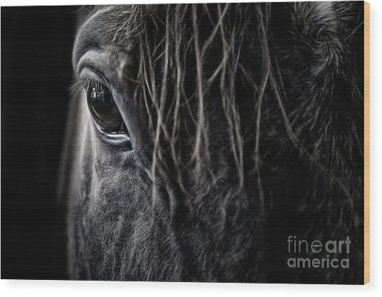 A Race Horse Named Tikki Wood Print