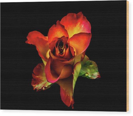 A Red Rose On Black Wood Print