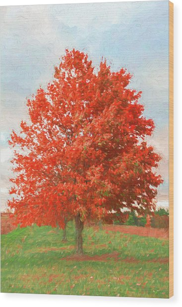 A Red Tree Wood Print by Jeff Oates Photography