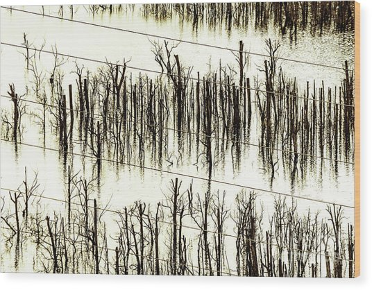 A Reflection Wood Print
