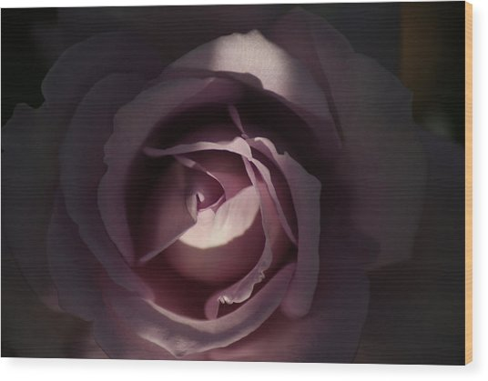 A Rose By Any Name Wood Print