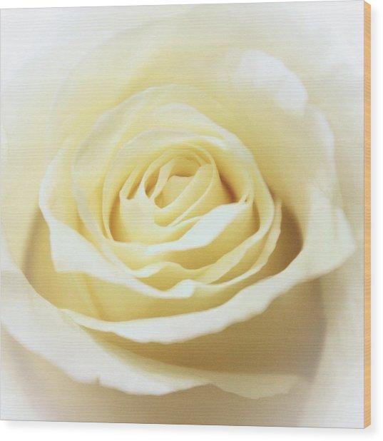 A Rose... Wood Print