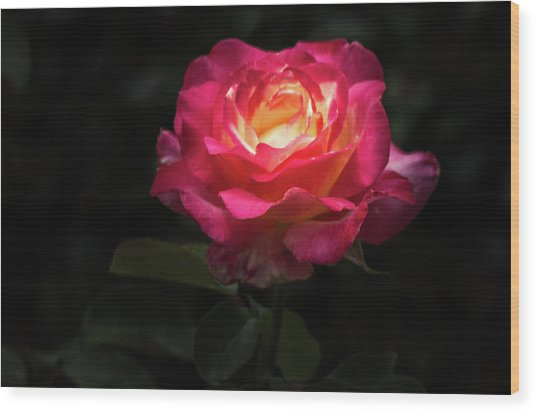 A Rose For Love Wood Print