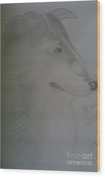A Rough Collie Dog Wood Print