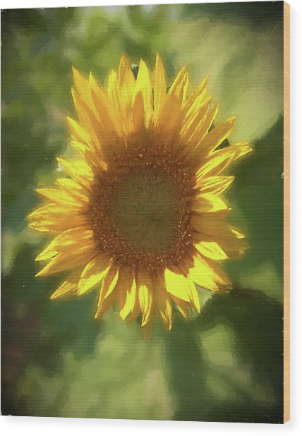 A Single Sunflower Showing It's Beautiful Yellow Color Wood Print