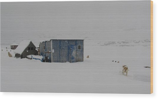 A Sledge Dog House Two Wood Print by Sidsel Genee