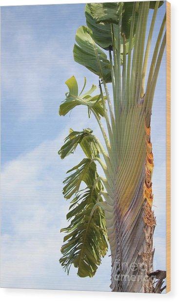 A Slice Of Nature Wood Print
