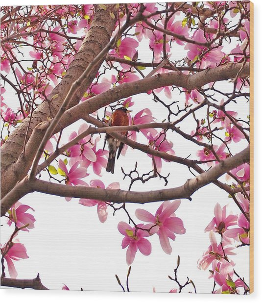 A Songbird In The Magnolia Tree Wood Print