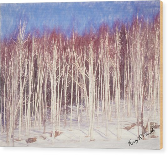 A Stand Of White Birch Trees In Winter. Wood Print