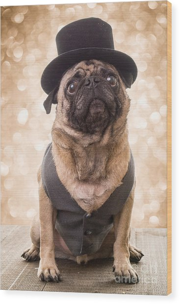 A Star Is Born - Dog Groom Wood Print