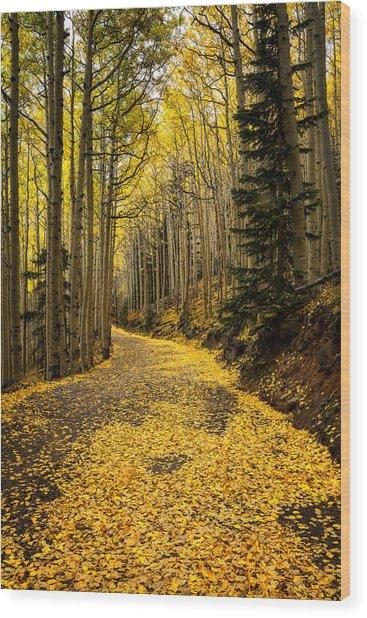 A Stroll Among The Golden Aspens  Wood Print