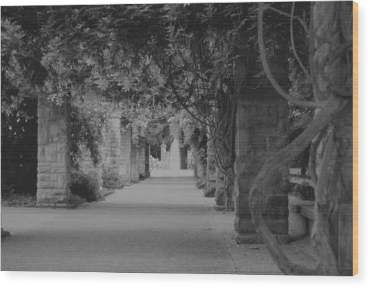 A Stroll Under The Vines Bw Wood Print