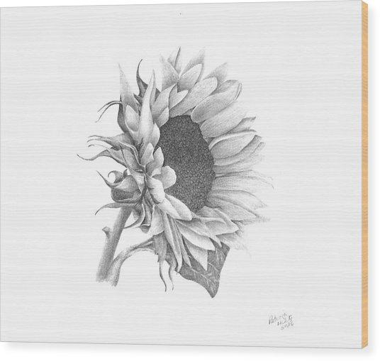 A Sunflowers Beauty Wood Print