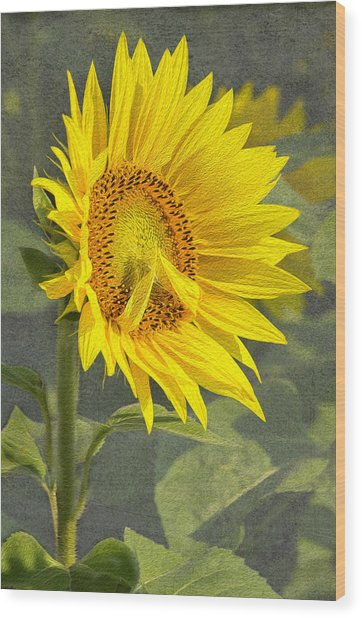 A Sunflower's Prayer Wood Print
