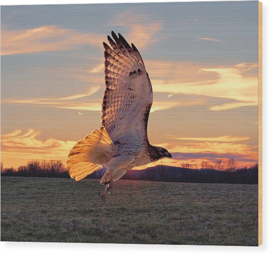 A Sunset Flight Wood Print