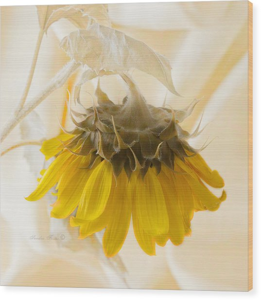 A Suspended Sunflower Wood Print