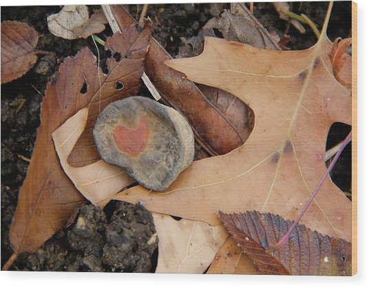 A Token Heart Wood Print by Shannon Guest