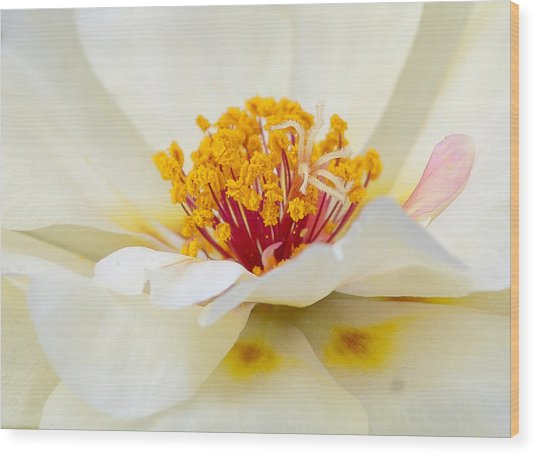 A Touch Of Pink Wood Print by David Waldrop