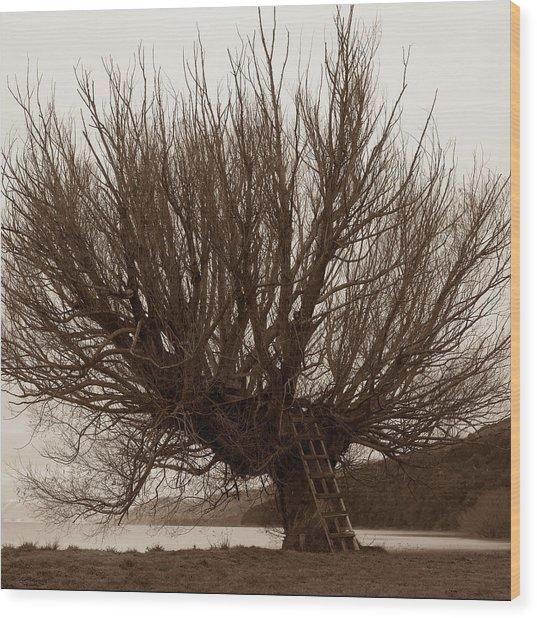 A Veritable Matriarch Wood Print